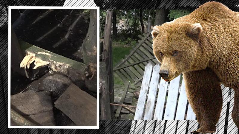 Un urs a făcut prăpăd în mai multe gospodării din Argeș, iar oamenii sunt îngroziți (VIDEO)