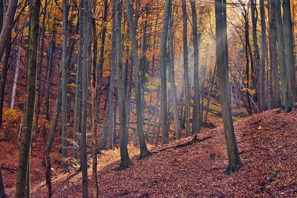 """Garda Forestieră Suceava a făcut verificări în pădurea unde au fost bătuți un activist de mediu și doi jurnaliști: """"Nu au fost identificate tăieri ilegale"""""""